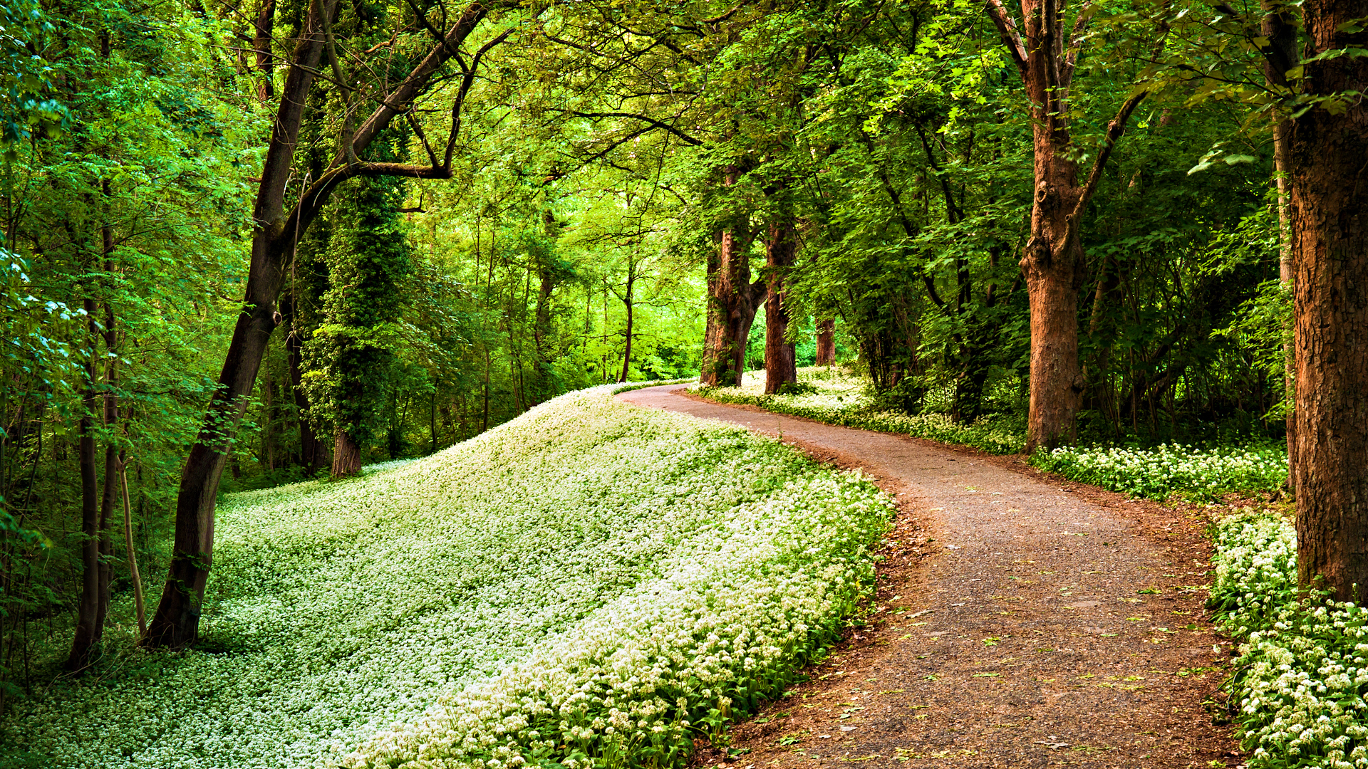 239 path hd wallpapers backgrounds wallpaper abyss Pathway images