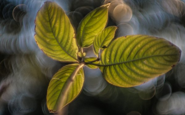 Earth Leaf Floating Bokeh Macro Minolta HD Wallpaper | Background Image