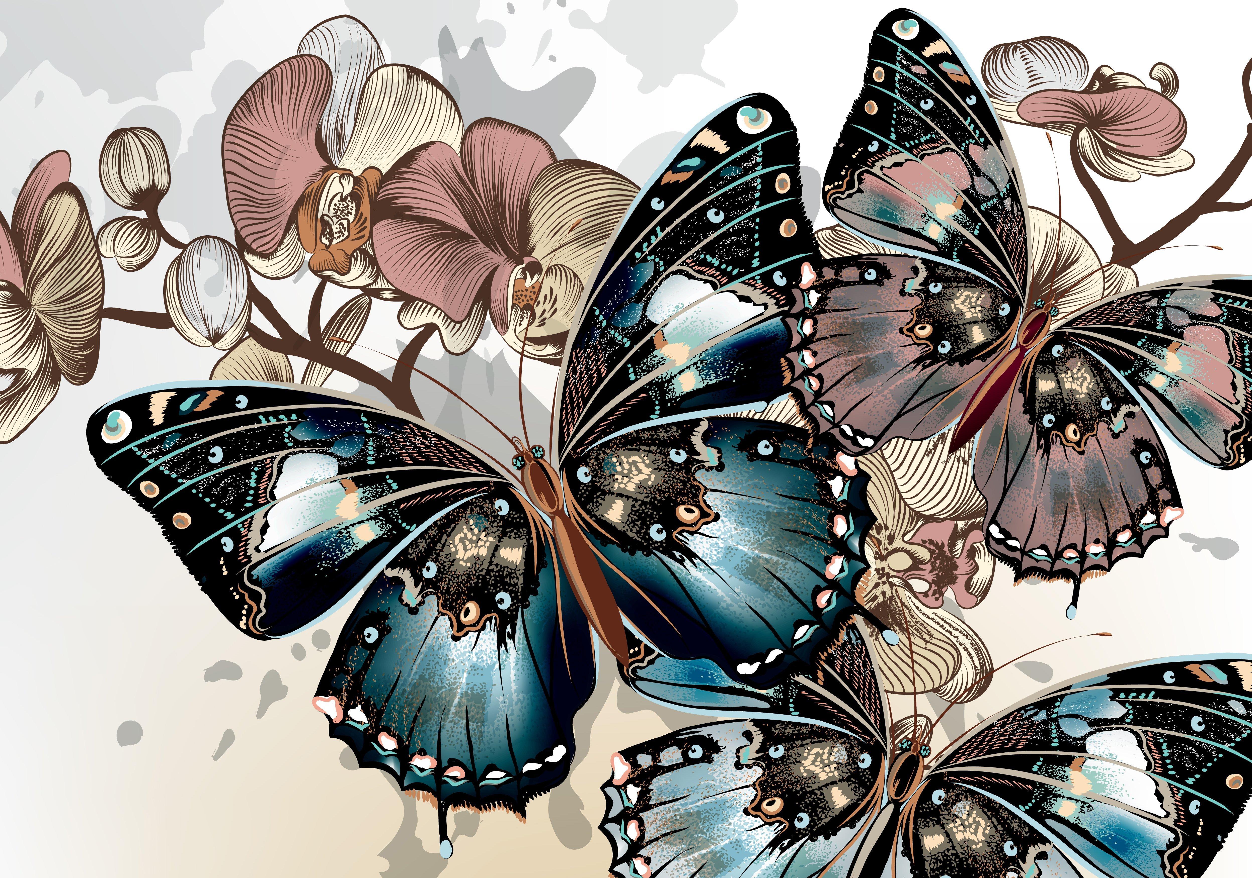 Графика картинки бабочки