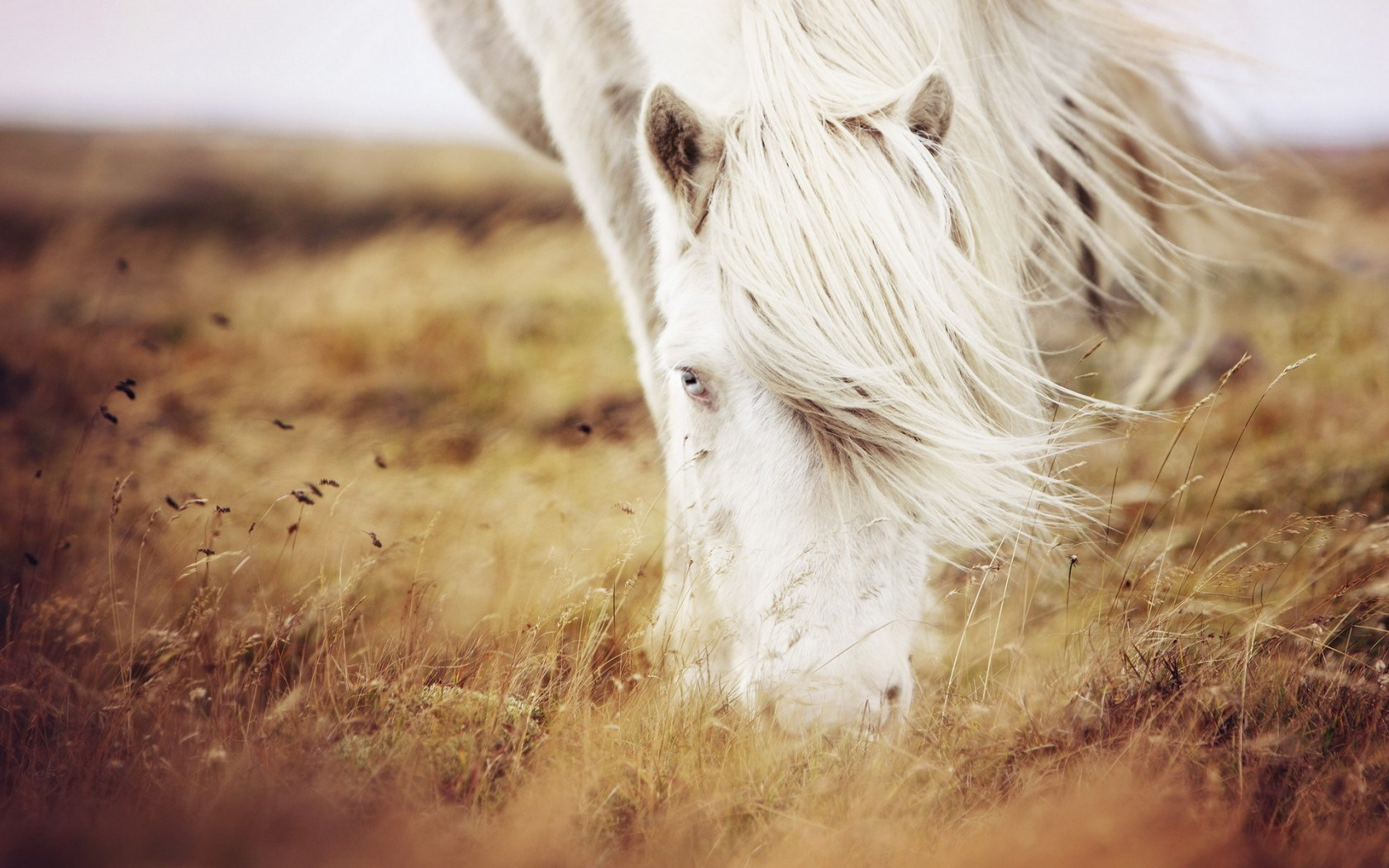 Horse Wallpaper And Background Image
