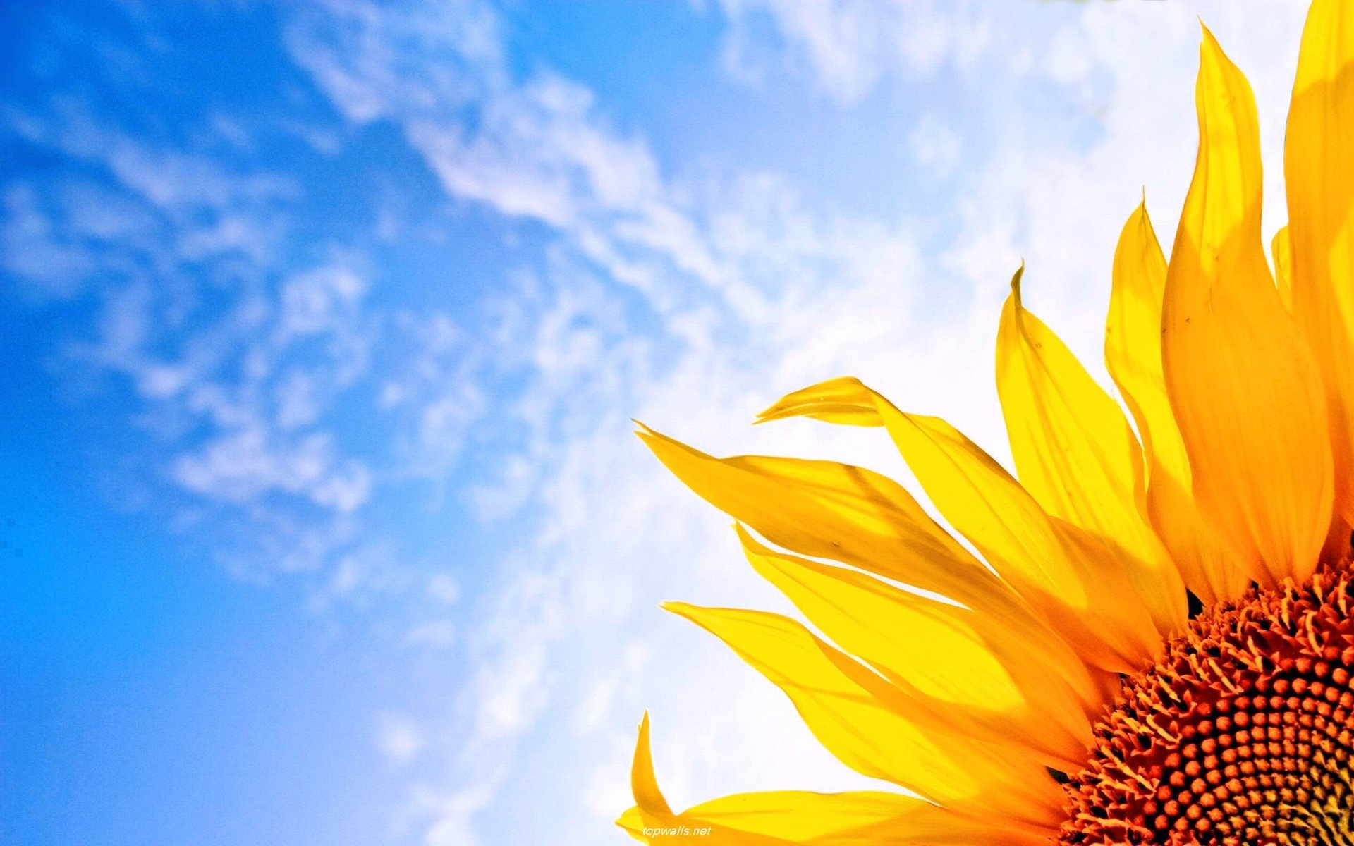 Earth - Spring  Sunflower Sunny Colorful Yellow Sky Wallpaper