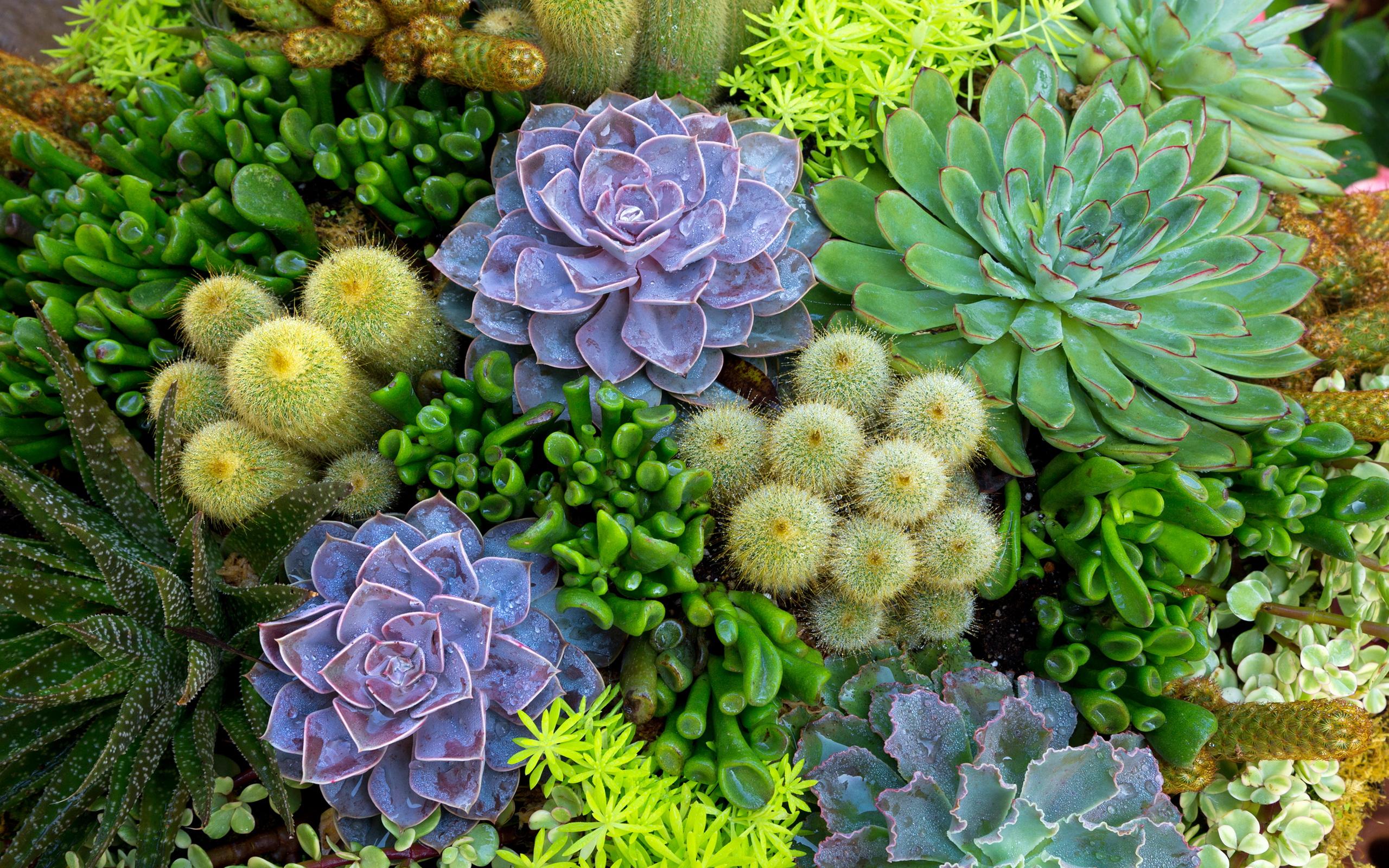 Piante Pendenti Da Appartamento : Cactus full hd wallpaper and background image