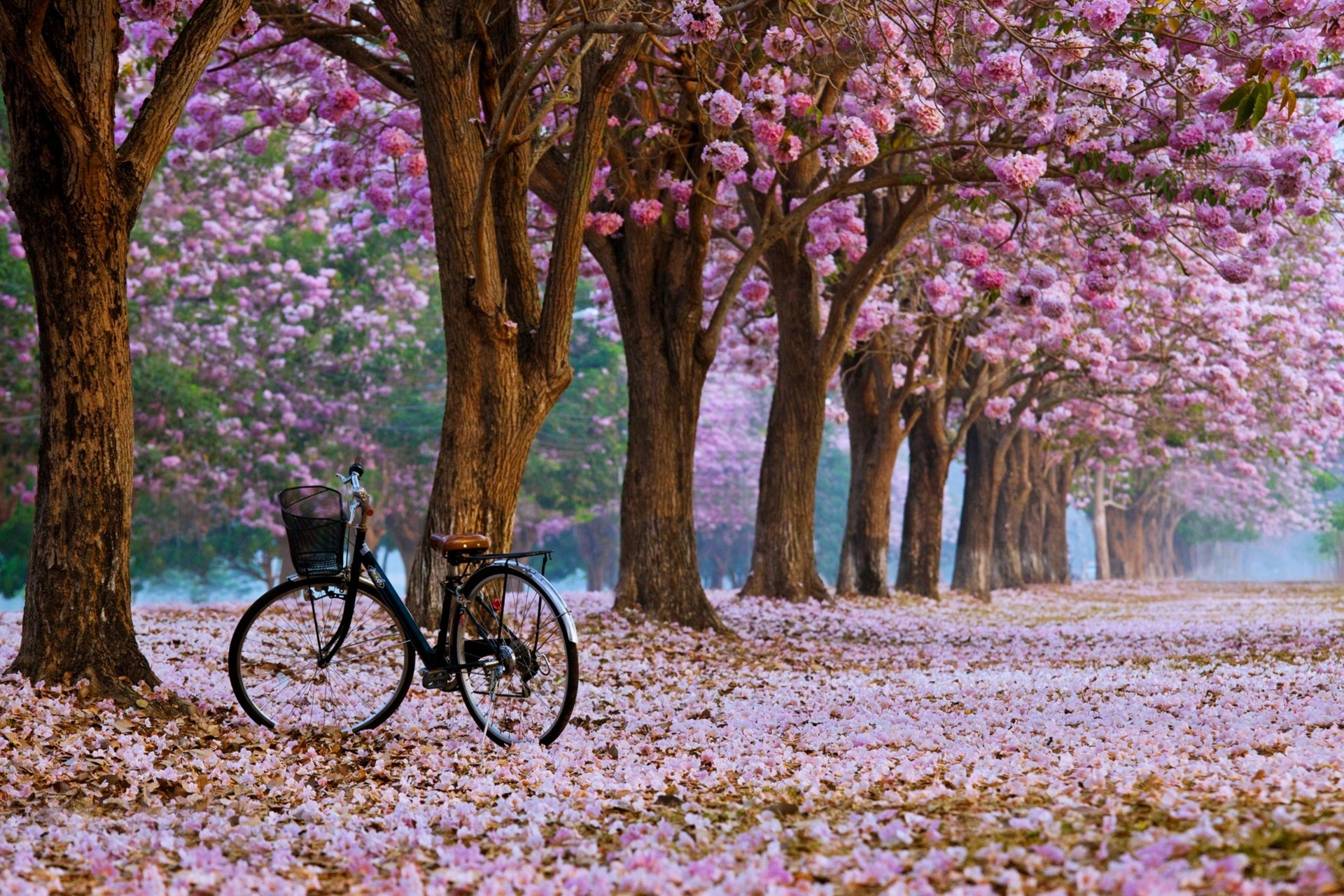 Earth - Spring  Bicycle Earth Flower Nature Park Tree Wallpaper
