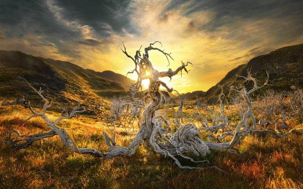Earth Sunrise Sun Tree Dead Tree Hill Landscape Chile Patagonia HD Wallpaper | Background Image