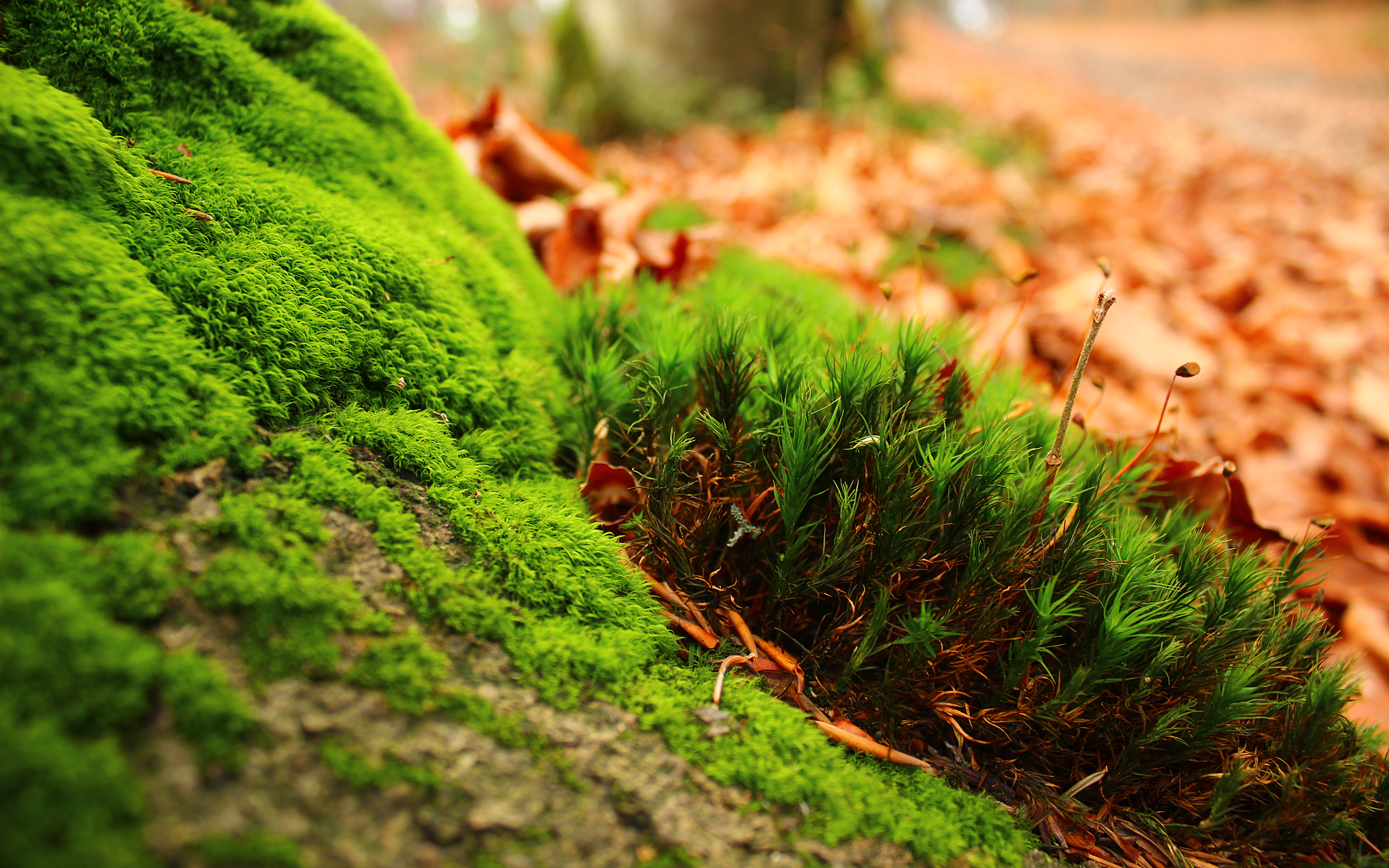 Moss Full HD Wallpaper And Background Image