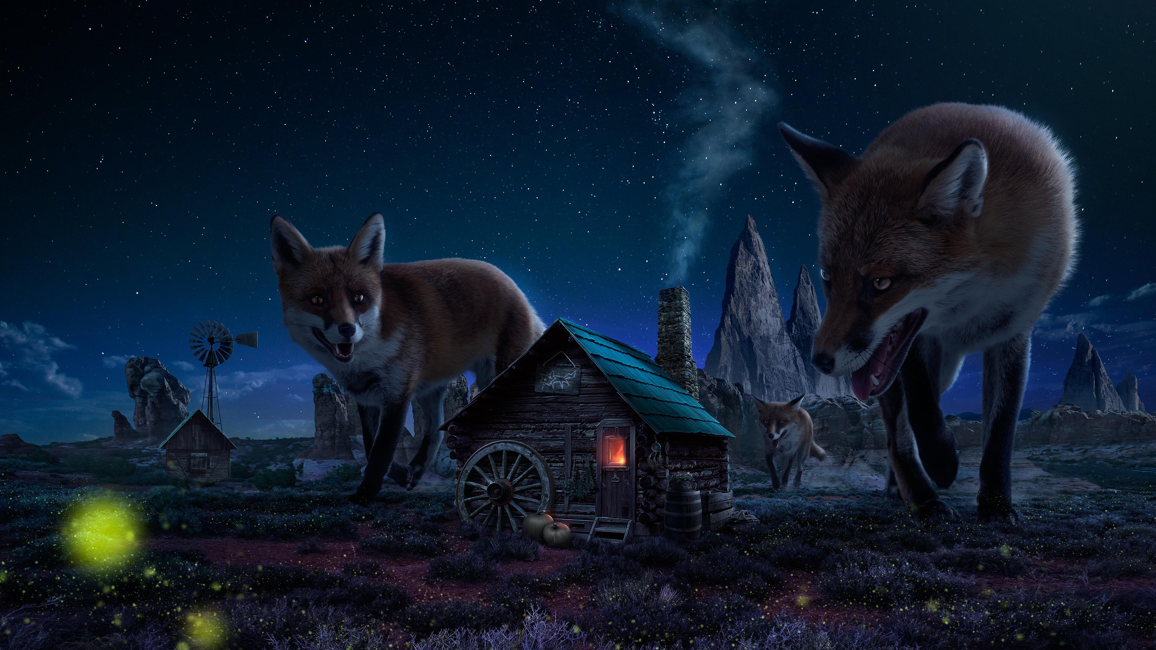 Wonderful Wallpaper Animal Night - 635911  Best Photo Reference_341329      .jpg