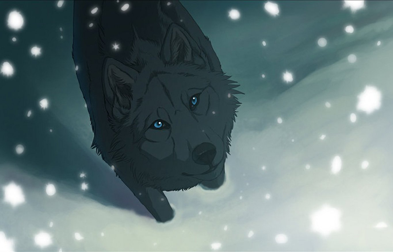 Wolf Wallpaper and Background Image | 1366x878 | ID:635000 ...