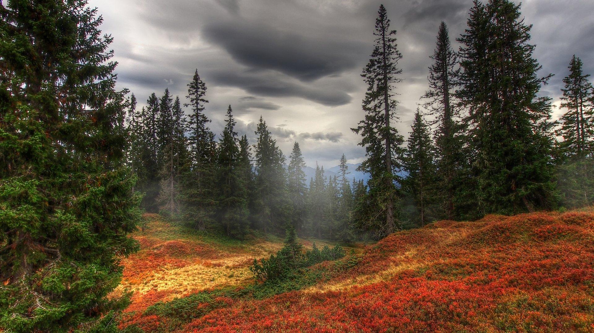 Tierra/Naturaleza - Bosque  Árbol Tierra/Naturaleza Pine Tree Otoño Foliage Fondo de Pantalla