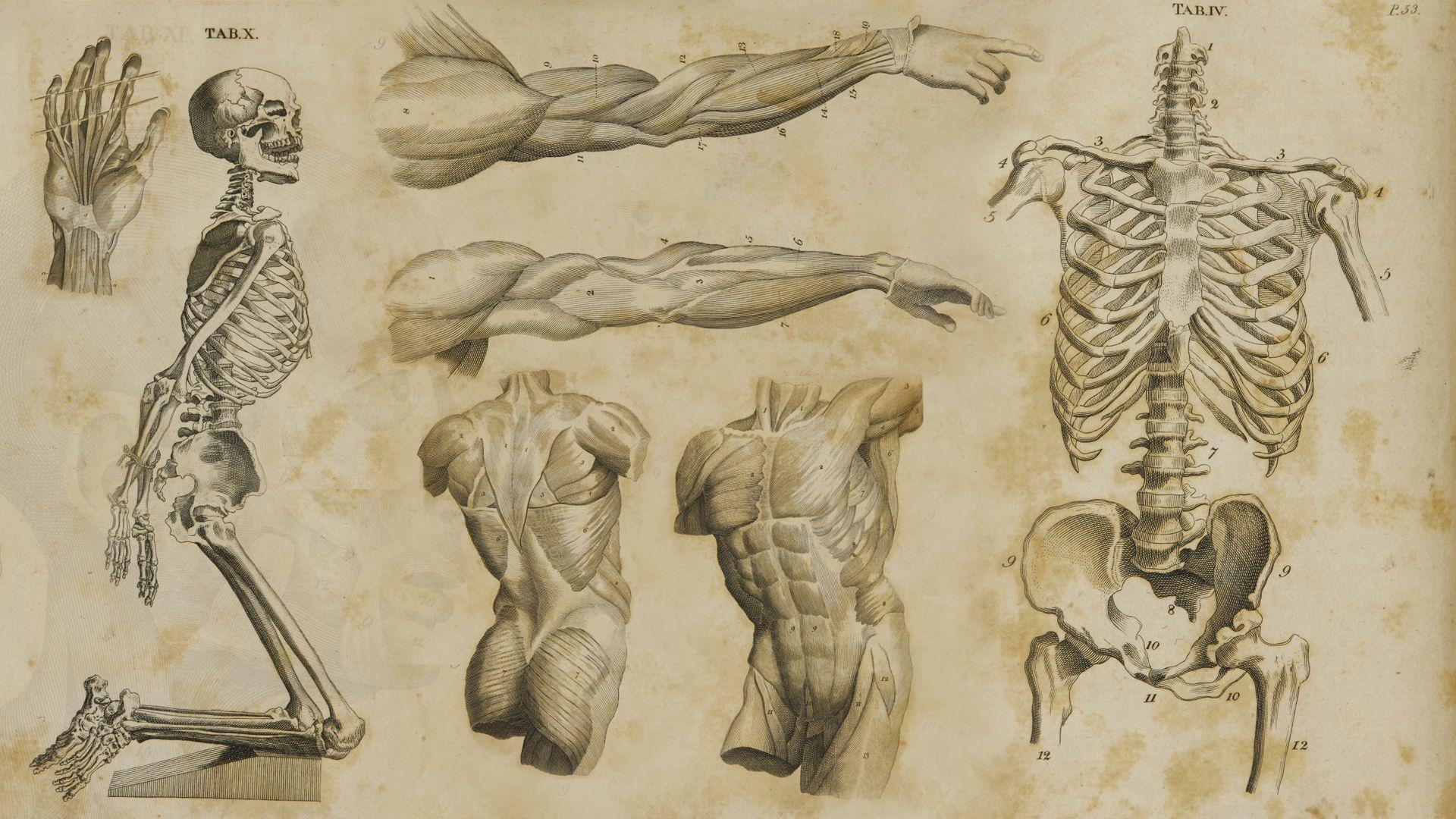 Anatomía Fondo de pantalla HD | Fondo de Escritorio | 1920x1080 | ID ...