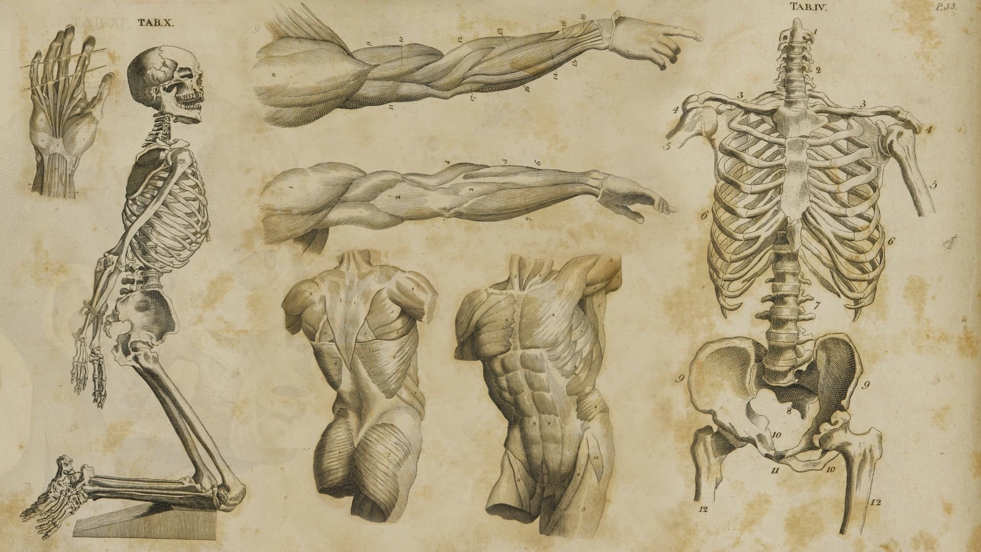 63 Anatomy Hd Wallpapers Background Images Wallpaper Abyss