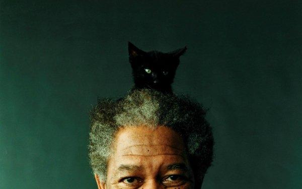 Celebrity Morgan Freeman Actors United States HD Wallpaper | Background Image