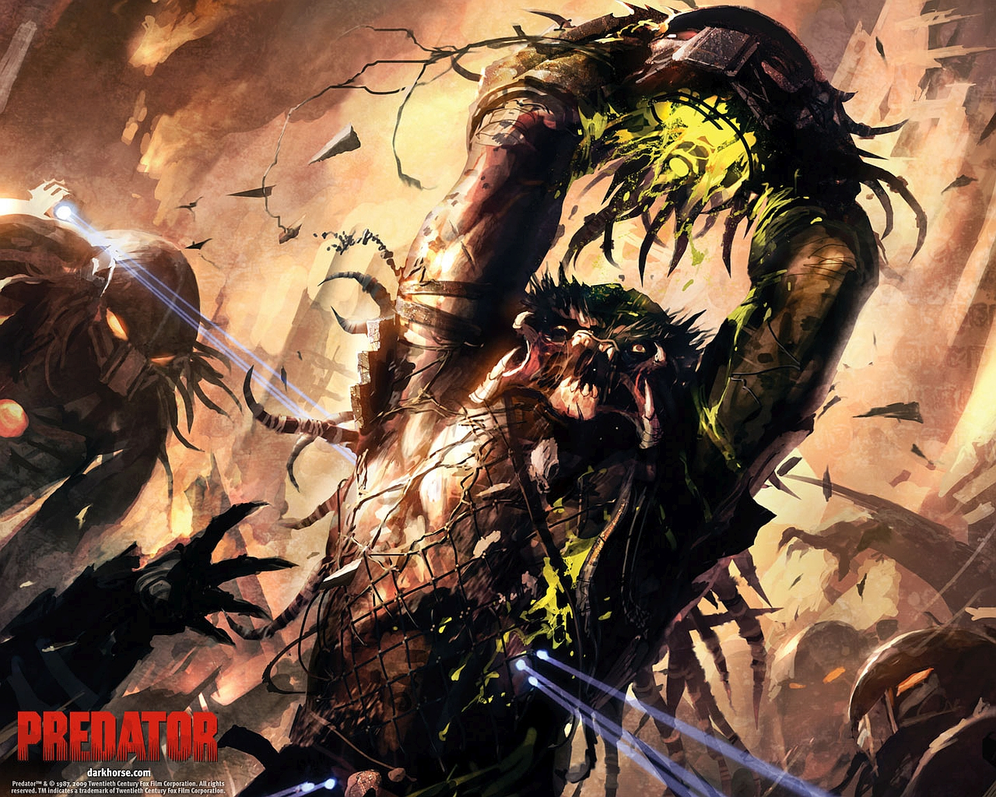 predator wallpaper and background image | 1440x1152 | id:666519
