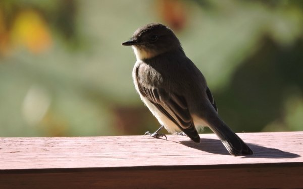 Animal Bird Birds HD Wallpaper   Background Image