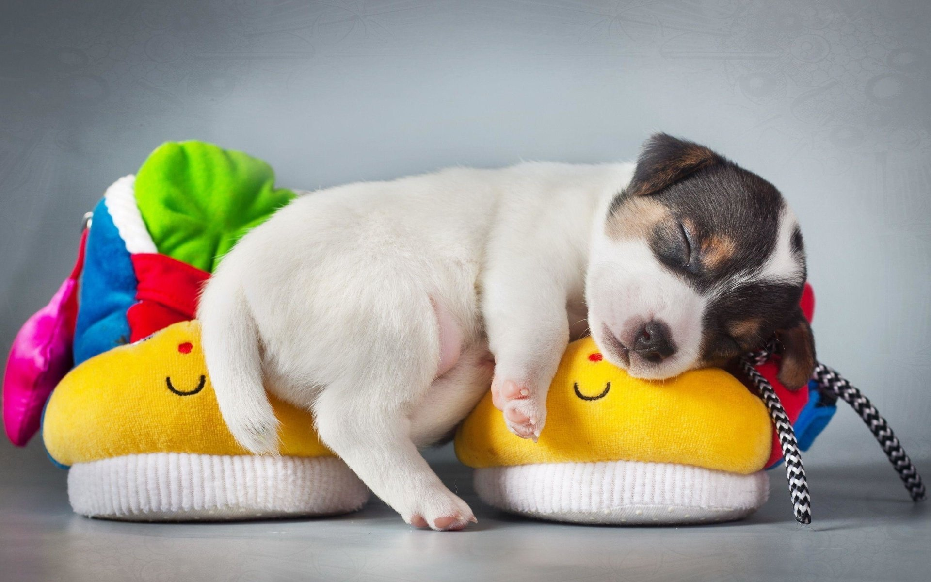 Animal - Puppy  Animal Dog Sleeping Pet Cute Baby Animal Wallpaper