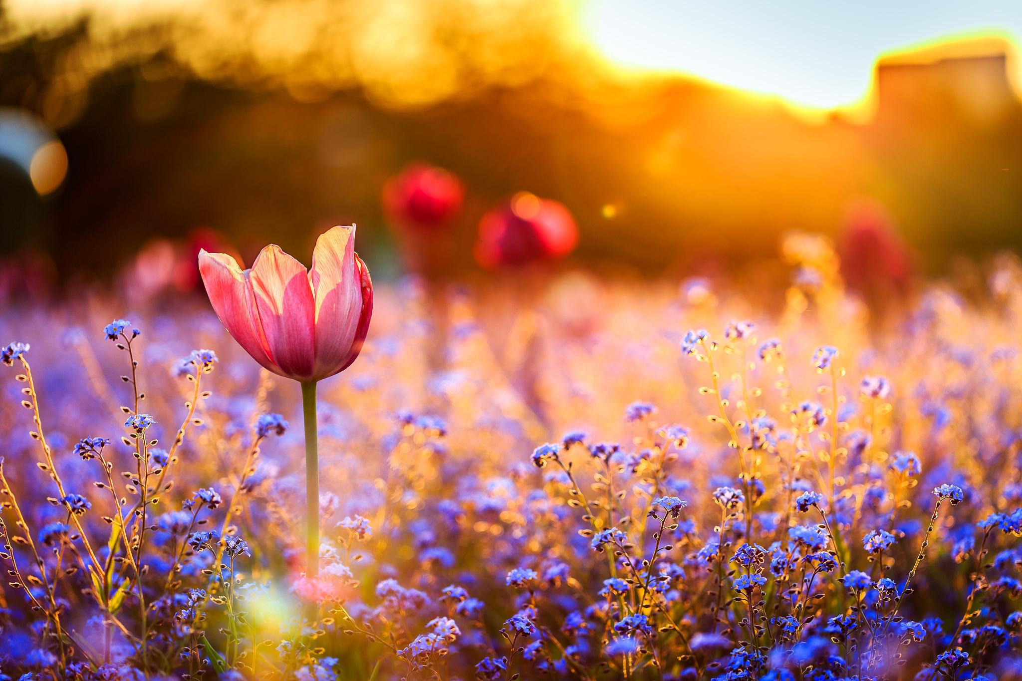 Spring Sunset Mood Papel De Parede Hd Plano De Fundo 2048x1365 Id 680491 Wallpaper Abyss