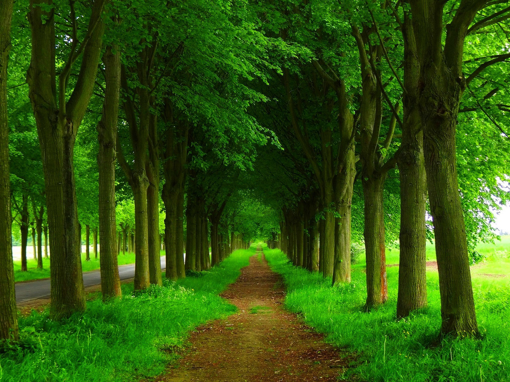 Dirt Path and Green Trees HD Wallpaper | Background Image ...