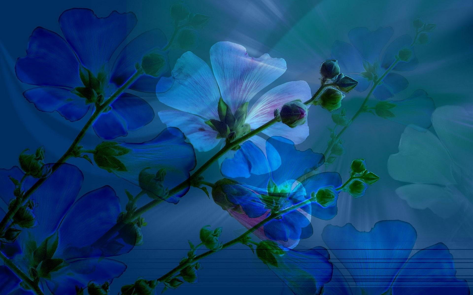 blue spring full hd wallpaper and background image