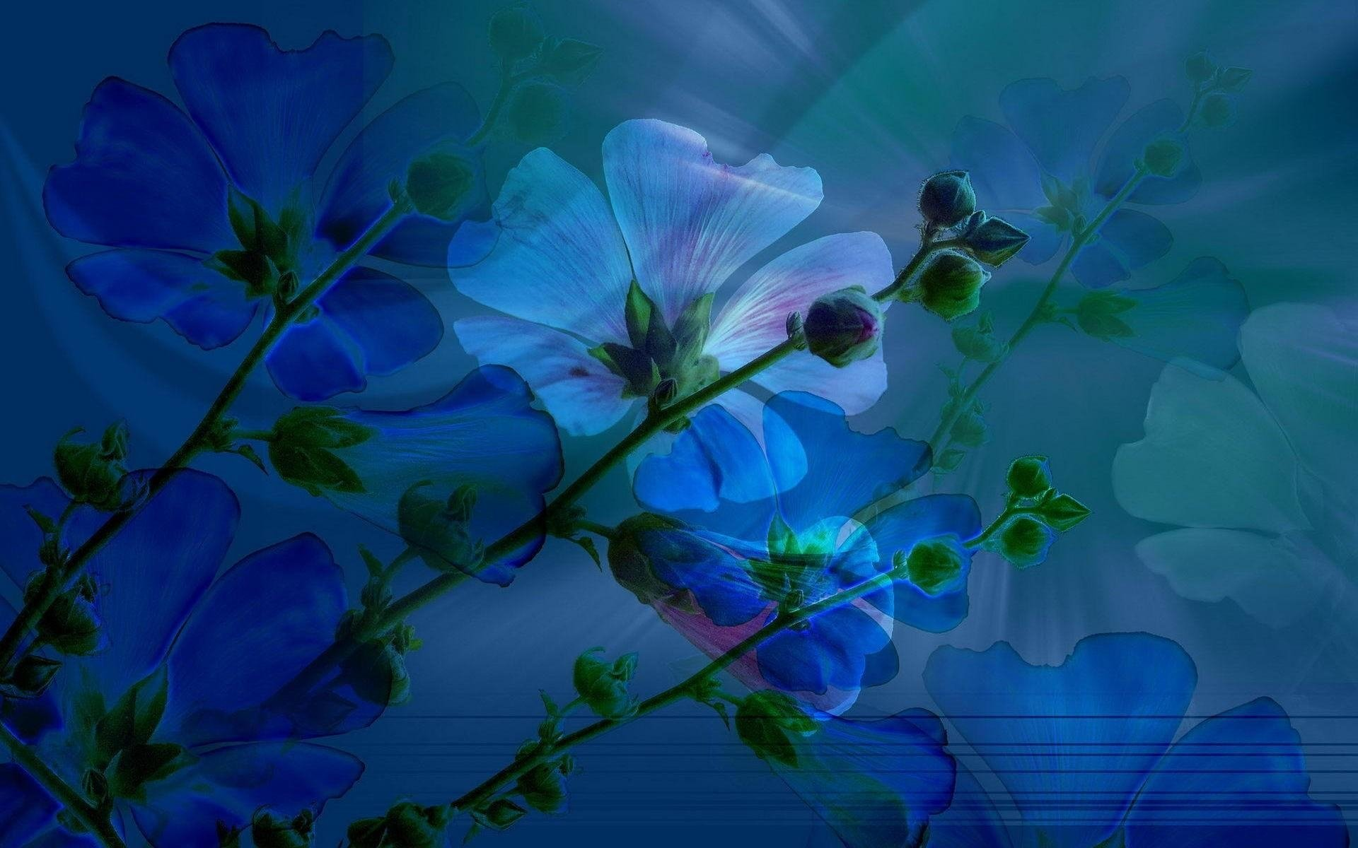 blue spring hd wallpaper background image 1920x1200