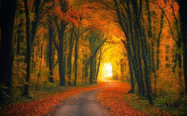 Man Made Road Forest Tree Fall Foliage Golden HD Wallpaper | Background Image