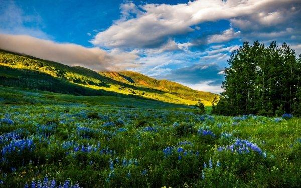 Earth Landscape USA Colorado Mountain Meadow Flower Nature Blue Flower HD Wallpaper | Background Image