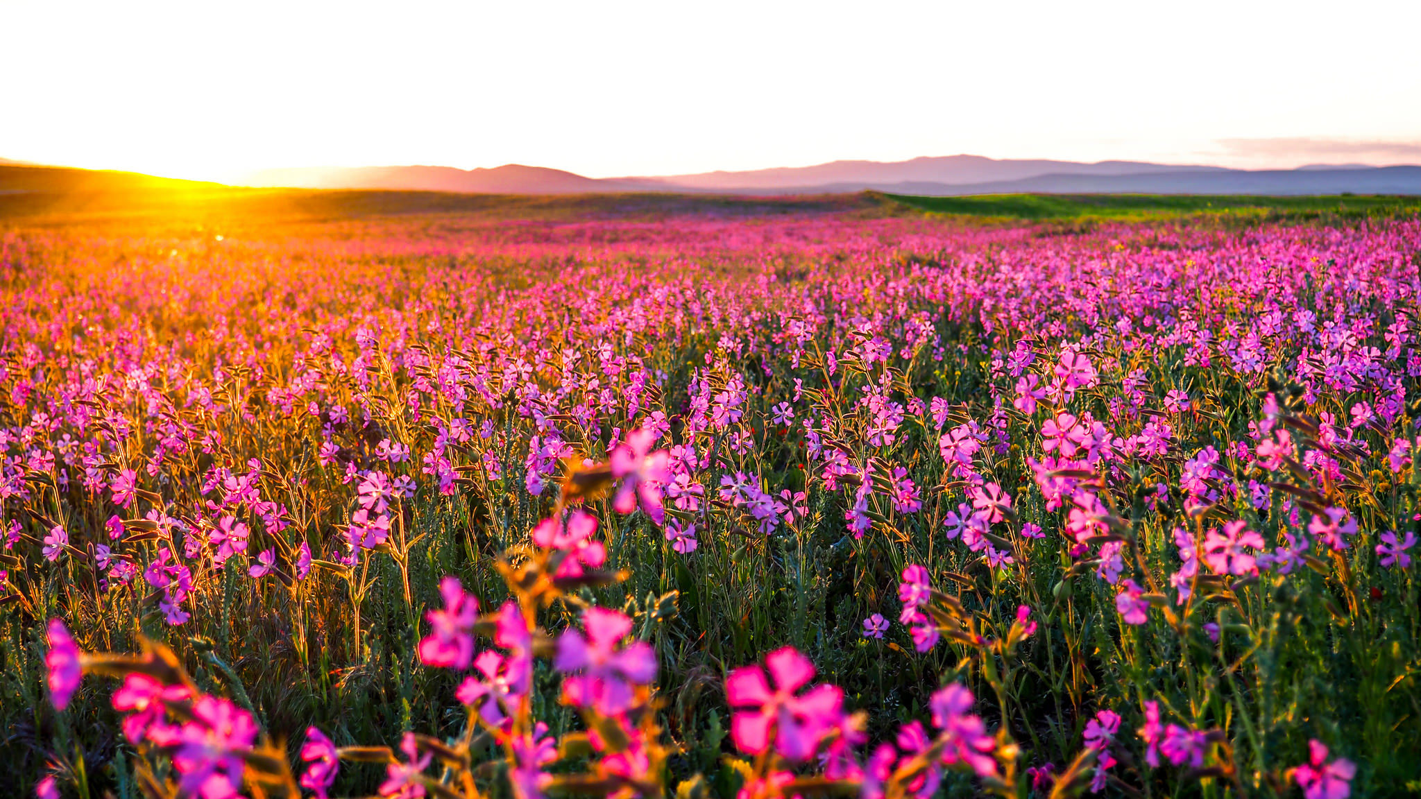Field full hd wallpaper and background 2048x1152 id 686307 for Flower landscape