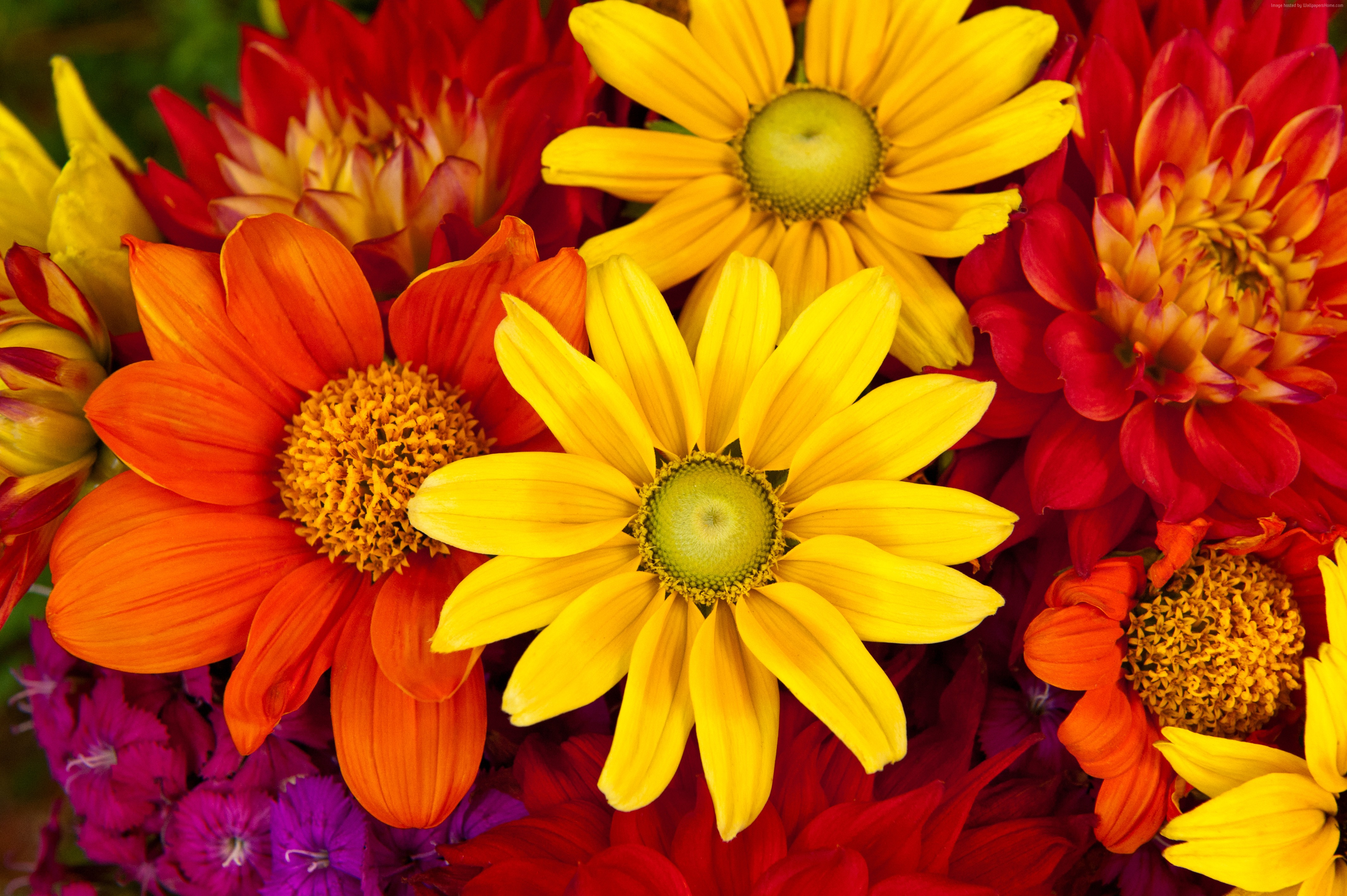 Colorful Flowers 4k Ultra Hd Wallpaper Background Image