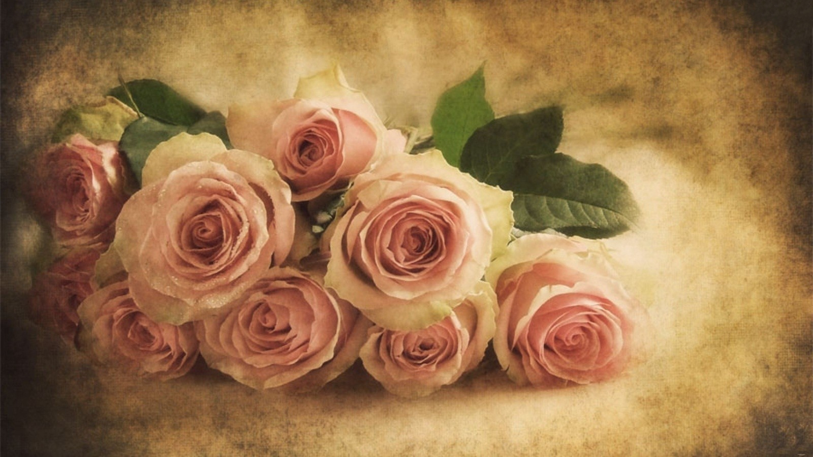 Vintage Soft Pink Roses Wallpaper and Background Image ...