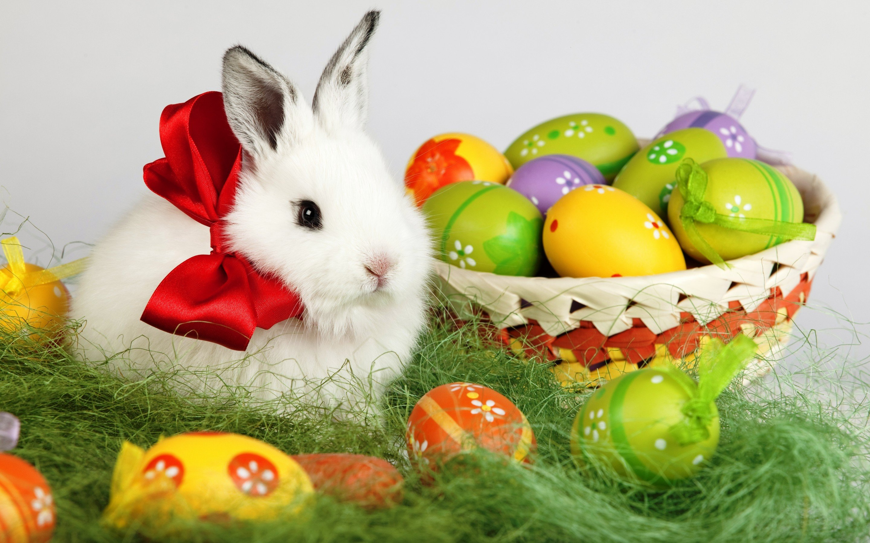 Egg Rabbit Wallpapers ID688737