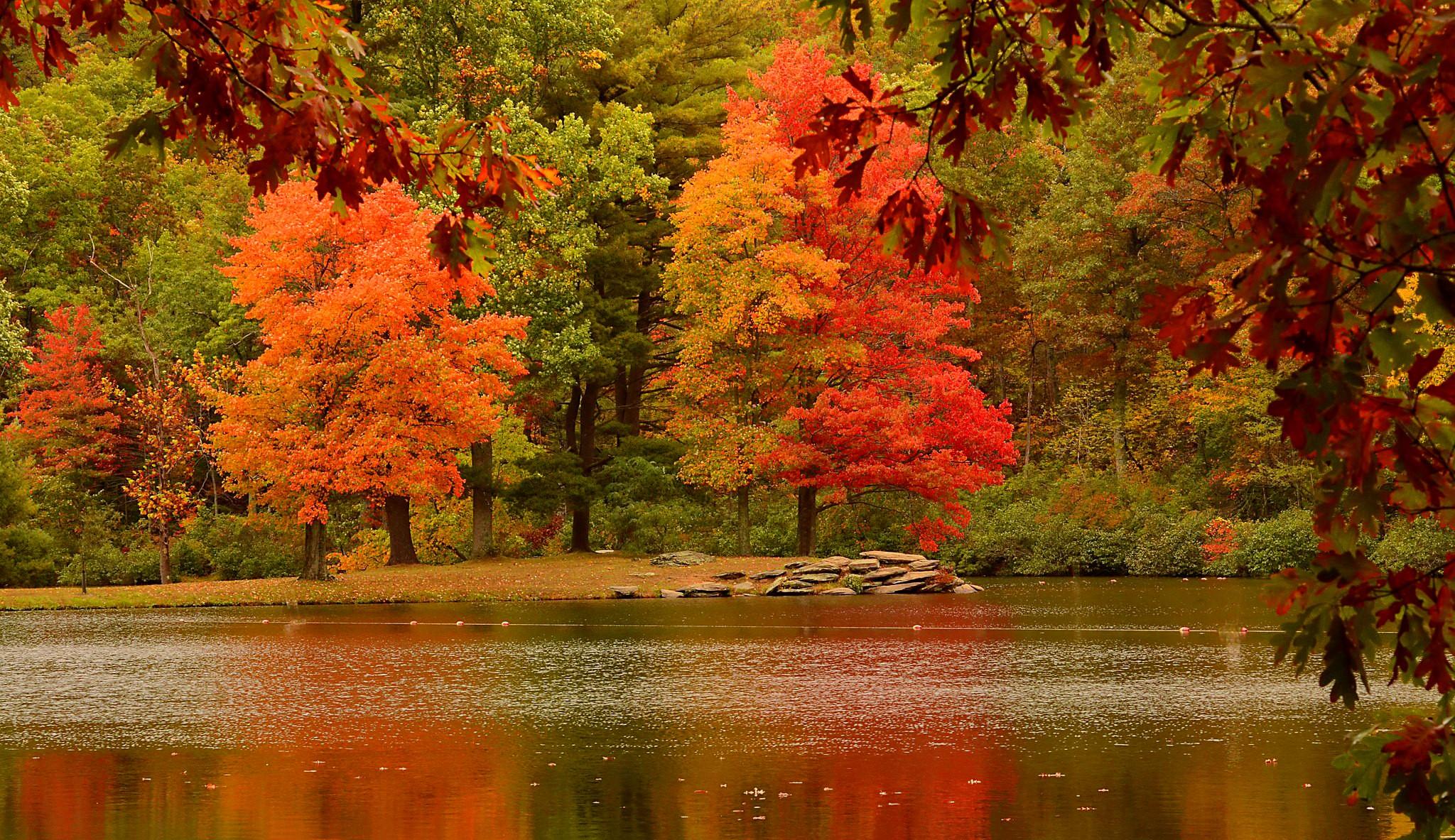 Trees In Autumn HD Wallpaper