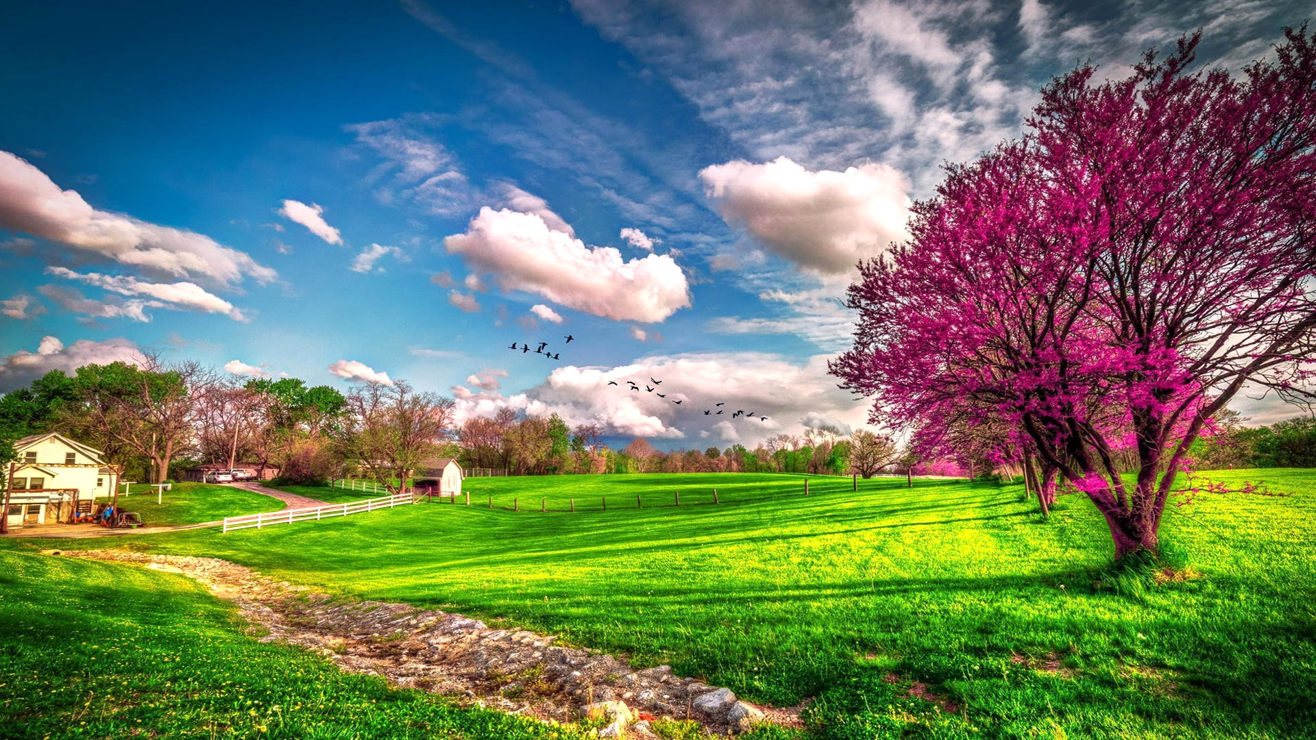photography landscape earth spring field tree blossom house grass wallpaper