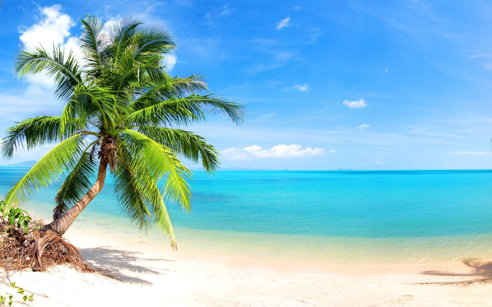 Palm Trees On The Beach: Palm Tree On Tropical Beach HD Wallpaper