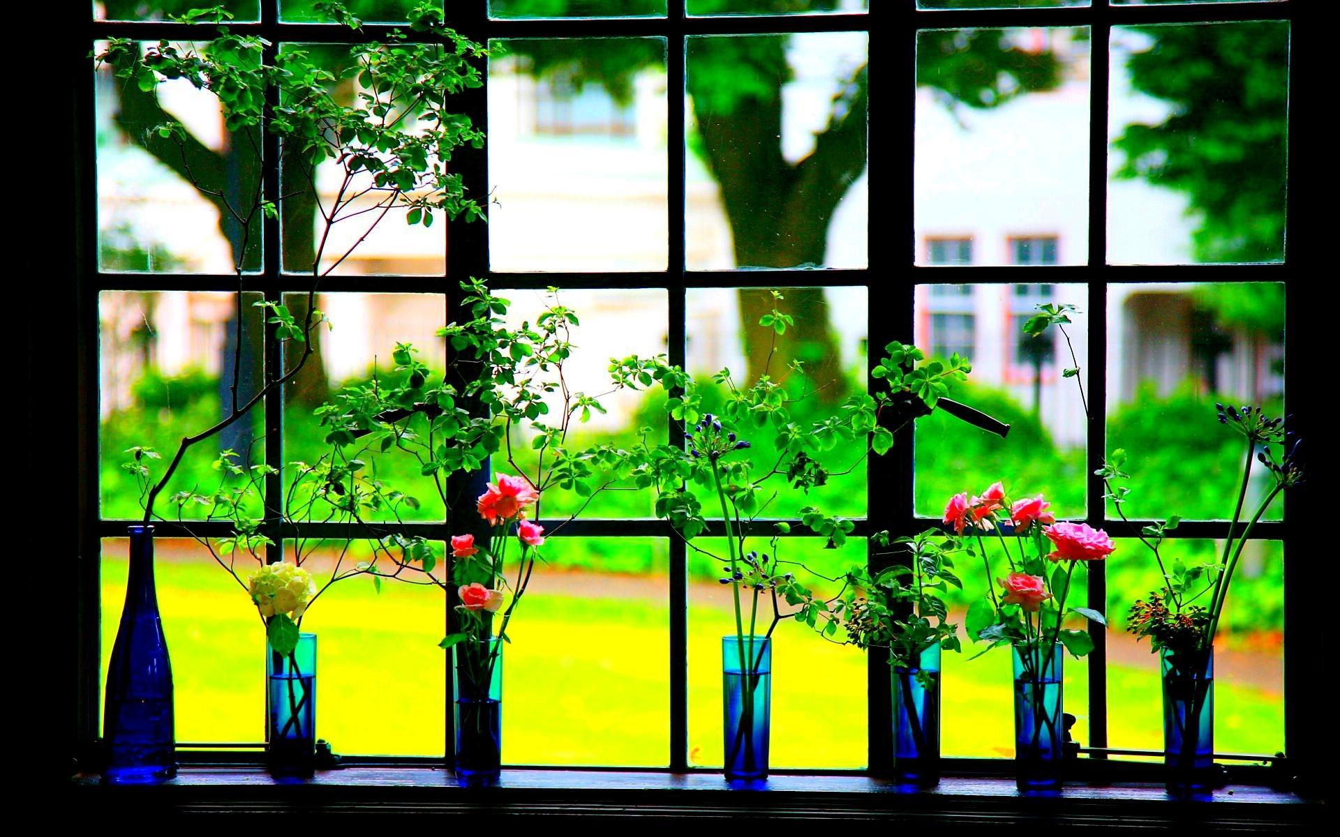 flowersthe window hd wallpaper | background image | 1920x1200
