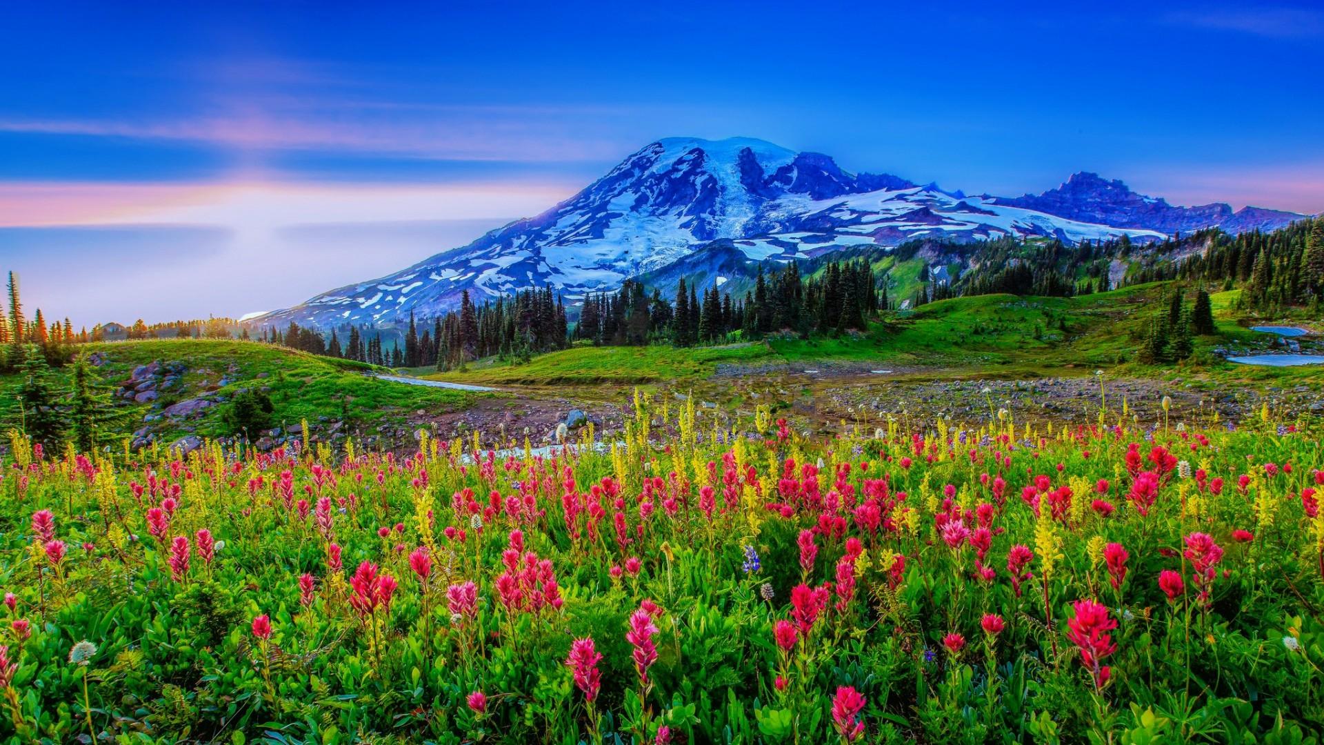 Spring landscape full hd fond d 39 cran and arri re plan 1920x1080 id 690877 - Initiatives fleurs et nature ...