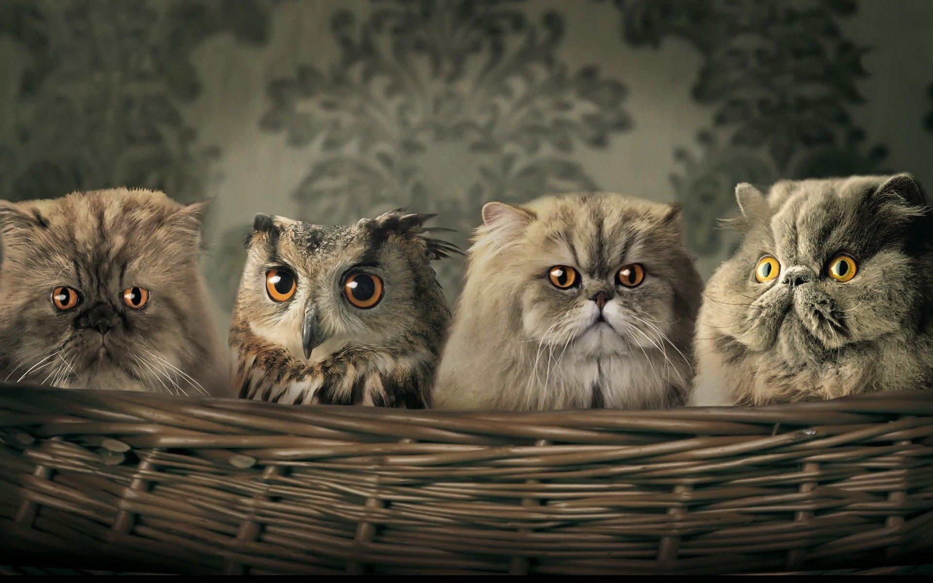 Животные - Кот  Милые Абстрактные Сова Обои