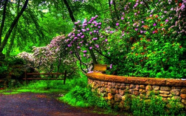 Terre/Nature Printemps Parc Fleur Arbre Mur Imagerie à grande gamme dynamique Fond d'écran HD | Image