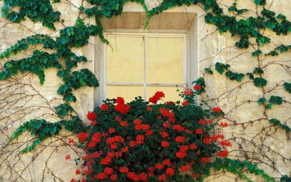 Man Made Window Flower Vine Green Red Flower Ivy HD Wallpaper | Background Image