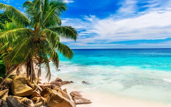 Tierra/Naturaleza Playa Tropico Seychelles Rock Océano Turquesa Azul Palmera Horizon Fondo de pantalla HD | Fondo de Escritorio