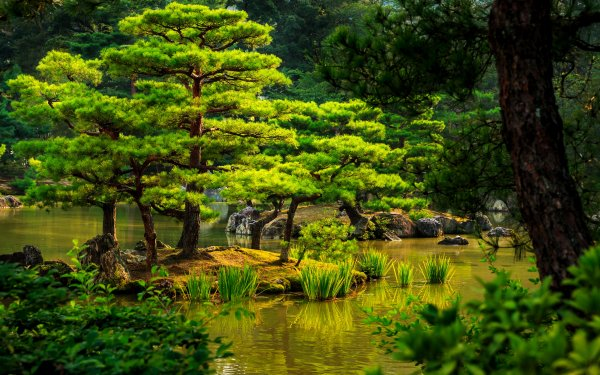 Man Made Japanese Garden Garden Green Tree Pond HD Wallpaper | Background Image