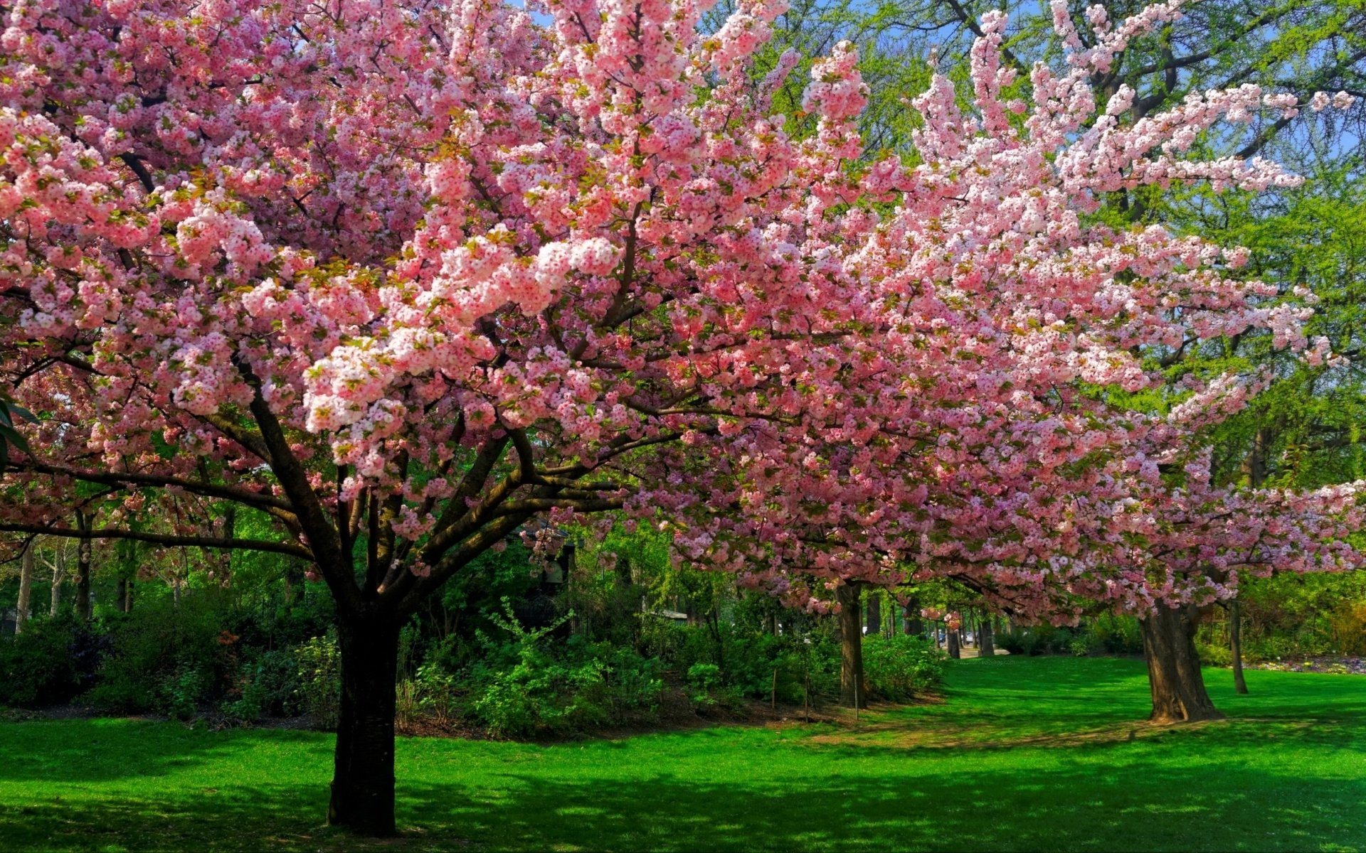 Earth - Spring  Earth Tree Blossom Pink Flower Wallpaper