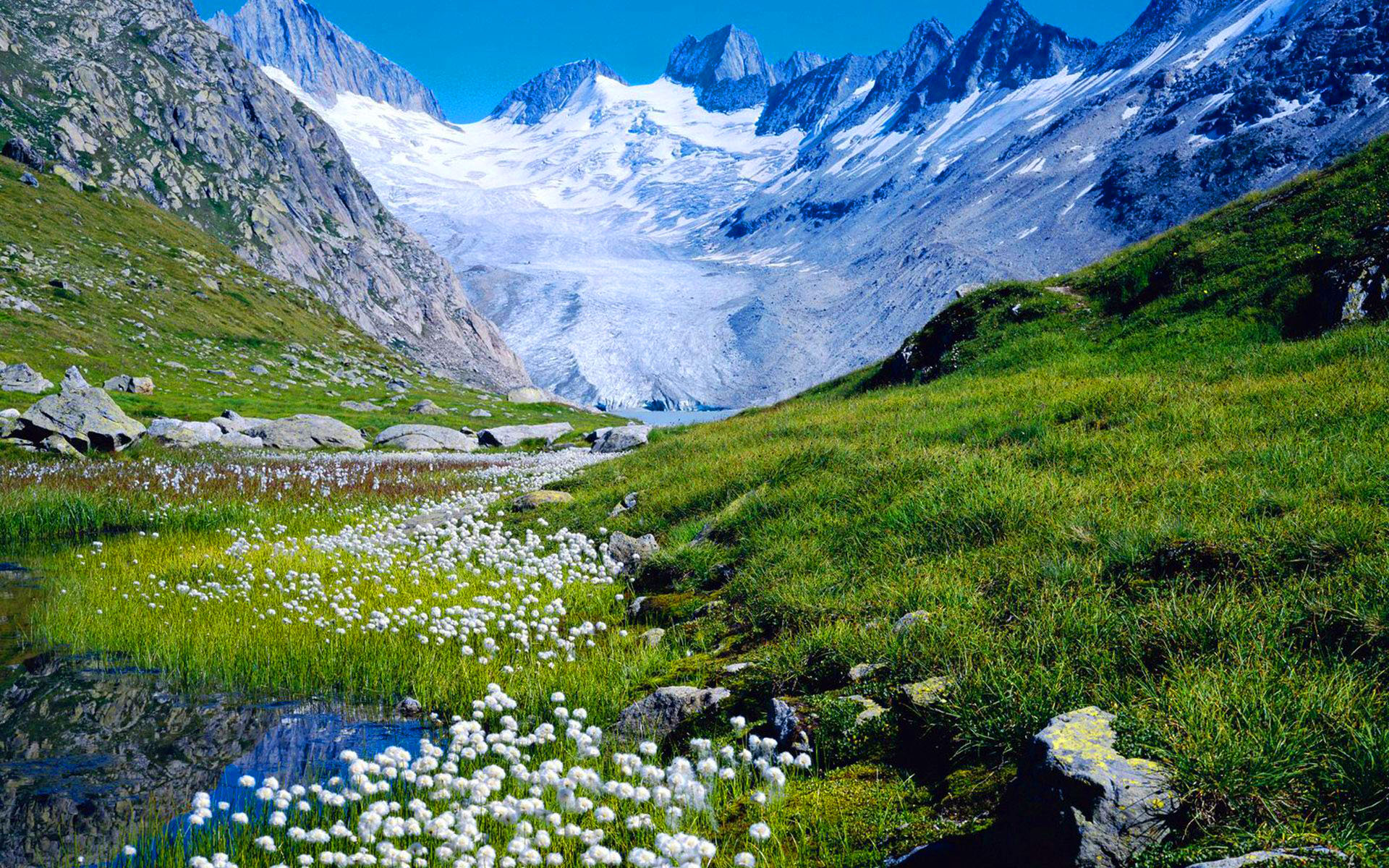 Free Flowers River Mountain: Mountain Flowers In Spring HD Wallpaper