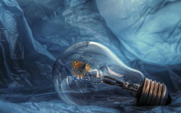 Man Made Light Bulb HDR Artistic Moth HD Wallpaper | Background Image