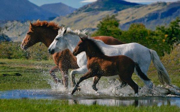 Animal Horse Running HD Wallpaper | Background Image