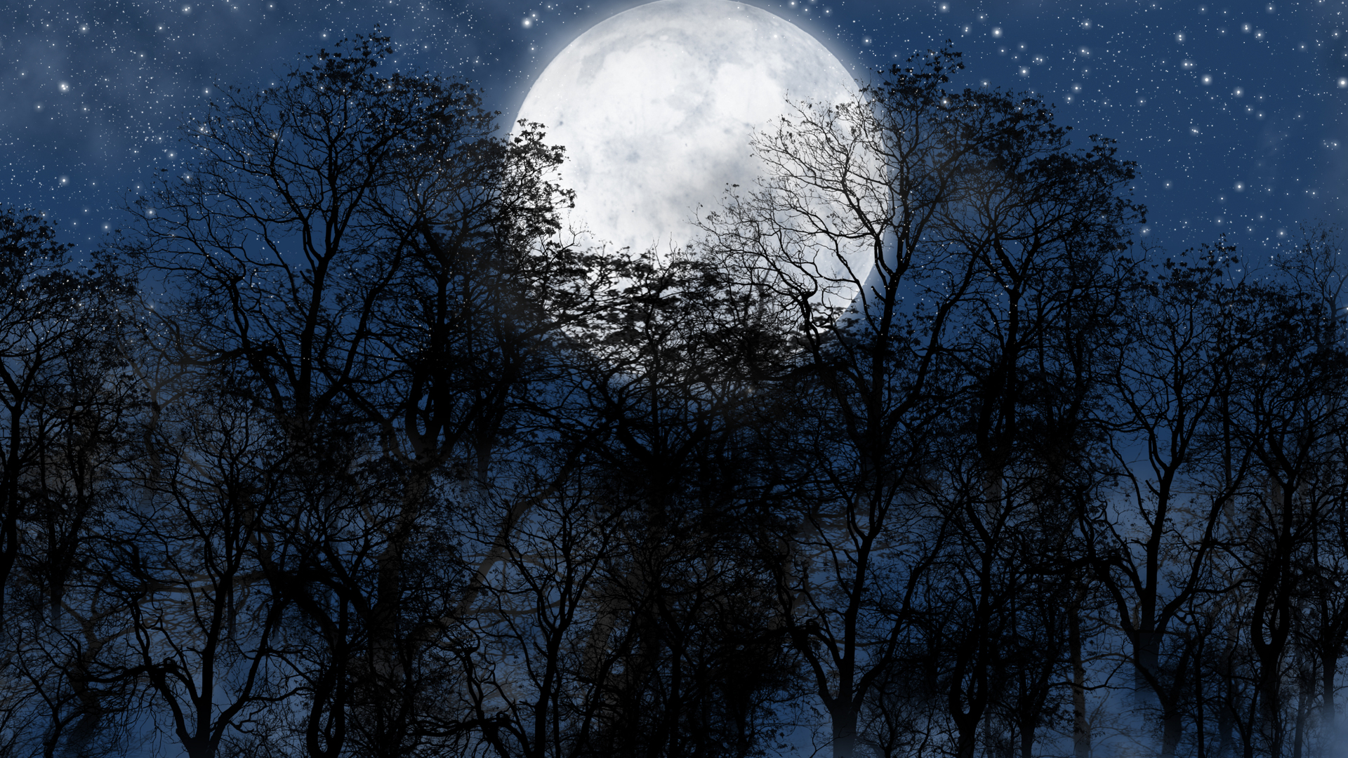 Forest On Full Moon Night HD Wallpaper