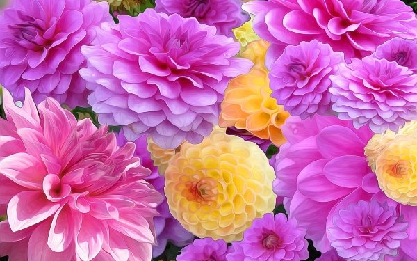 Artistic Painting Flower Dahlia Colors Colorful Pink Flower Yellow Flower HD Wallpaper | Background Image