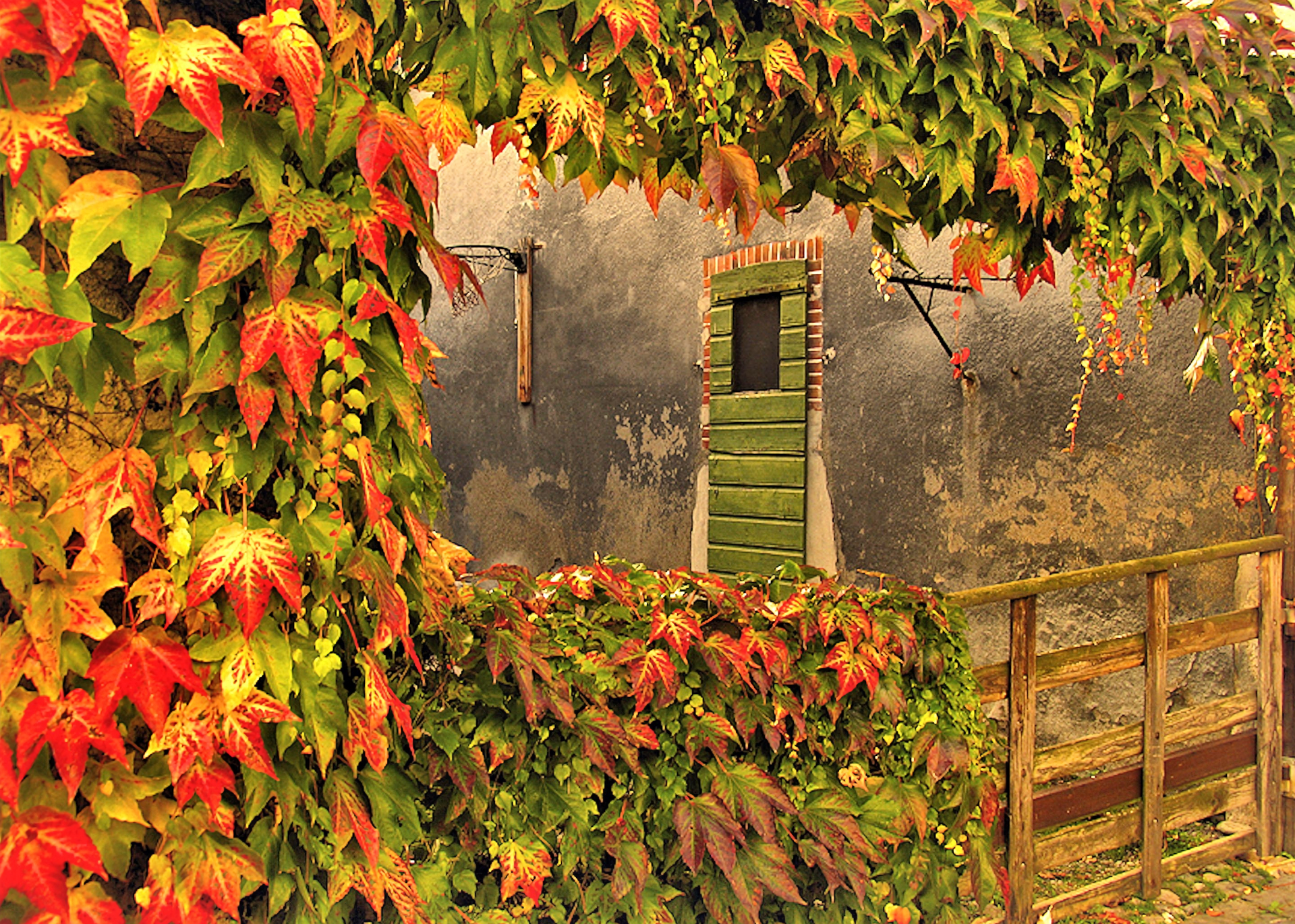 Artistic - Painting  Artistic Fall Foliage Leaf Fence Door Wallpaper