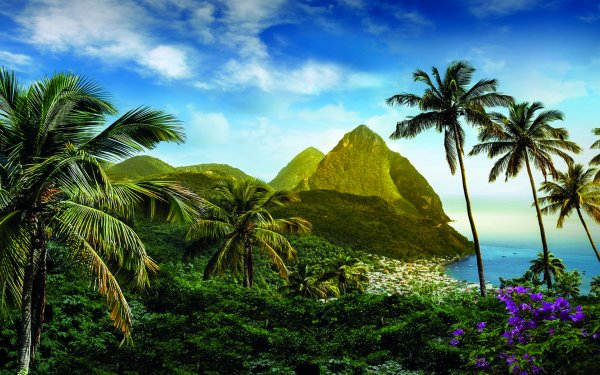 Photography Tropical Caribbean Palm Tree Mountain Flower Ocean Saint Lucia HD Wallpaper | Background Image