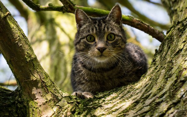 Animal Cat Cats Stare HD Wallpaper   Background Image