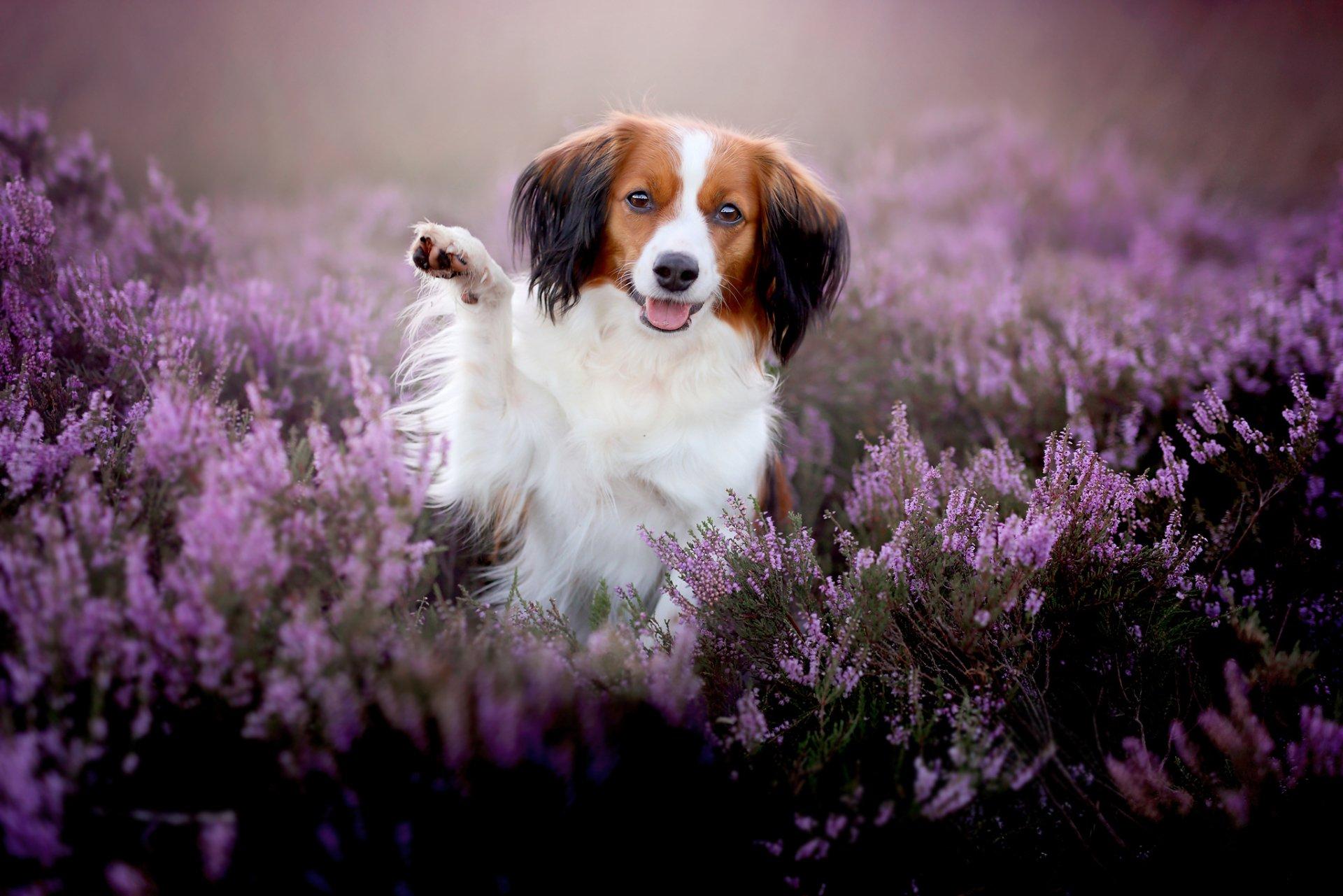 Dog Hd Wallpaper Background Image 2048x1366 Id