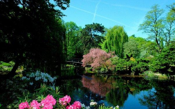 Man Made Japanese Garden Bridge Tree Flower HD Wallpaper | Background Image