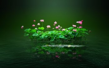 159 lotus hd wallpapers background images wallpaper abyss hd wallpaper background image id737557 mightylinksfo